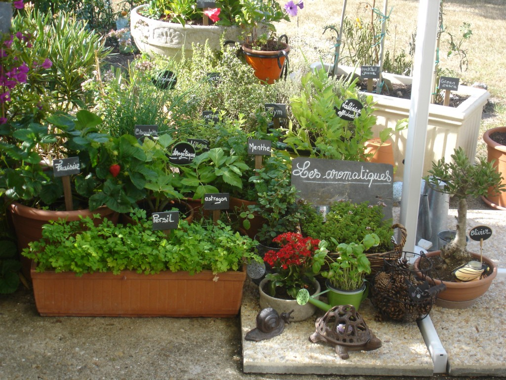 Les aromatiques au jardin : cuisine et bienfaits ! - Bien-être au ...
