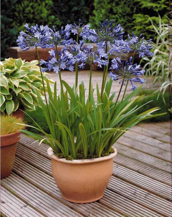 jardiner la m diterran e sur votre terrasse bien tre au naturel. Black Bedroom Furniture Sets. Home Design Ideas