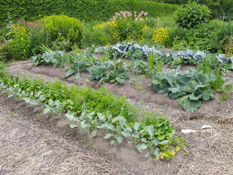 Jardin astuces naturelles de jardinage bien tre au for Au jardin conseils en jardinage