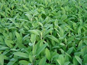 Jardin : astuces naturelles de jardinage ! - Bien-être au