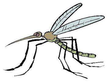 traitements-anti-moustiques-calvi-partir-soir-L-1
