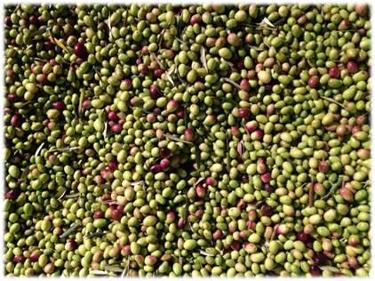 olive en vrac