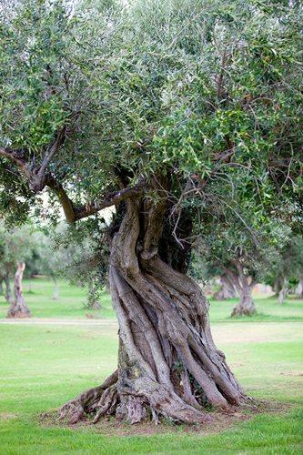 olivier seul
