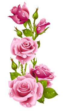 rose_rose bienetre