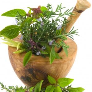 phytotherapie_3 principes actifs plante