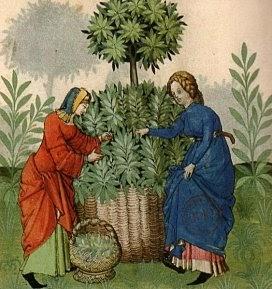 stage plantes médicinales histoire