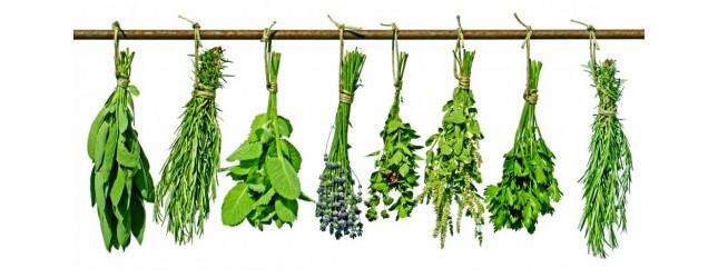 tisanes plantes sui sèchent