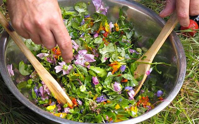 Cuisiner les plantes sauvages bien tre au naturel - Cuisiner les herbes sauvages ...