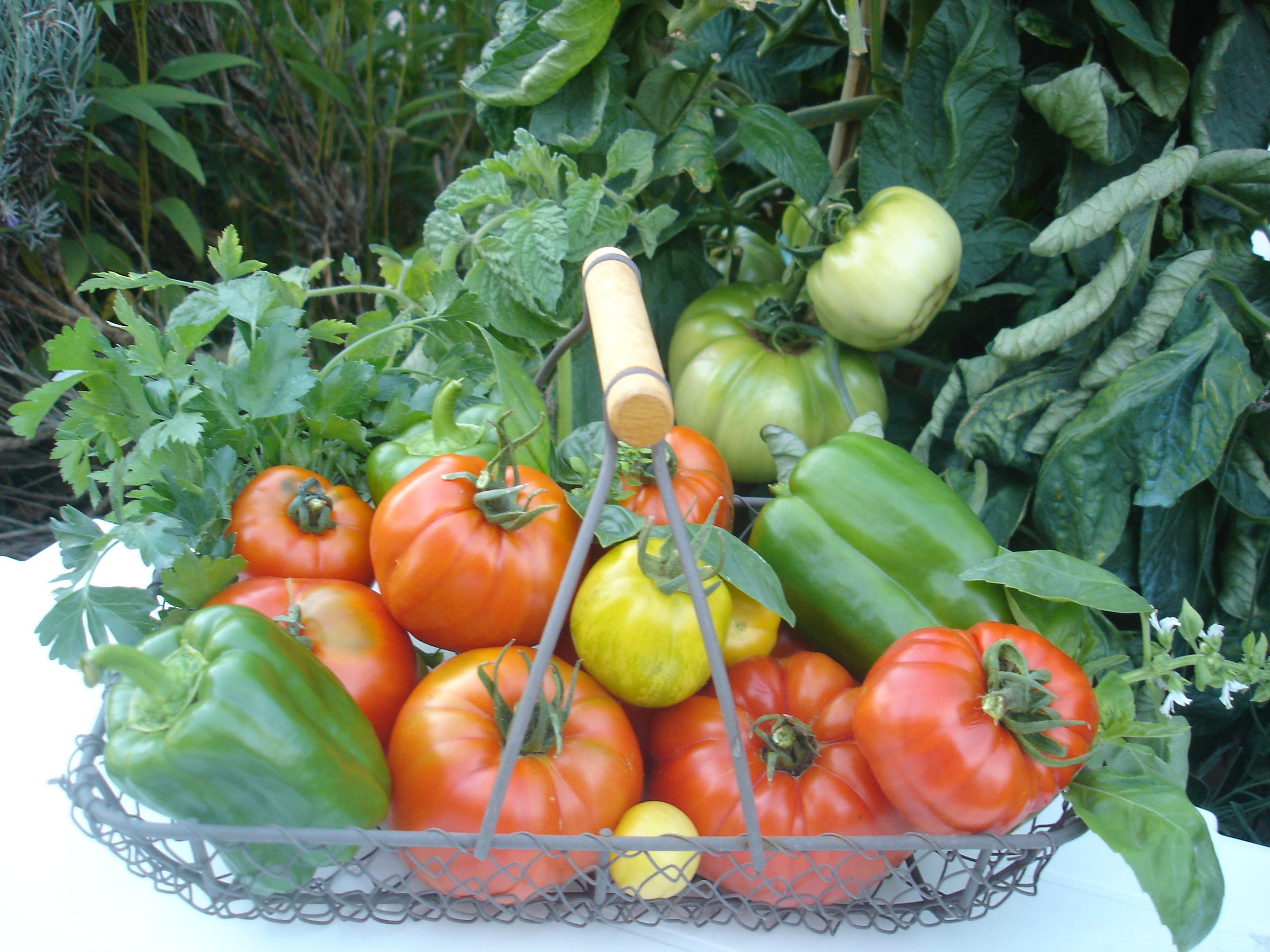 Le secret de la forme est dans notre assiette mangeons for Vers dans les tomates