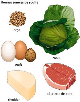 01_montage soufre aliments