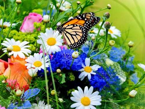 Les fleurs et la santé