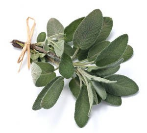 sauge-officinale-