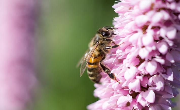 Couvertures-sauver-abeilles-710x434