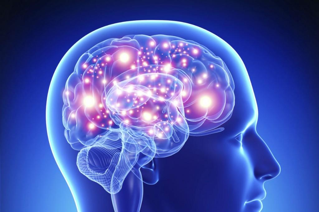 cerveau inro