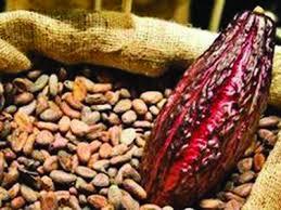 intro cacao