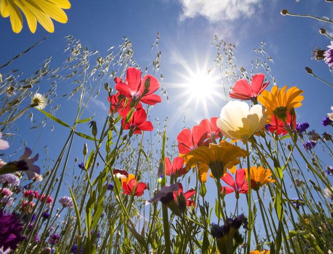 fleurs-de-bach-les-fleurs-du-bien