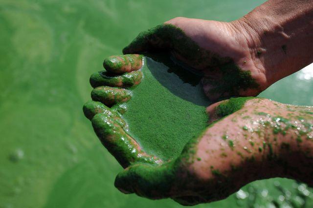 algue-bleu-vert-ou-spiruline-en-chine_5500217-intro