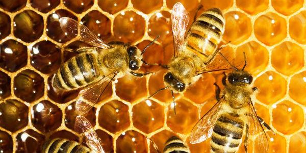 abeilles-et-miel