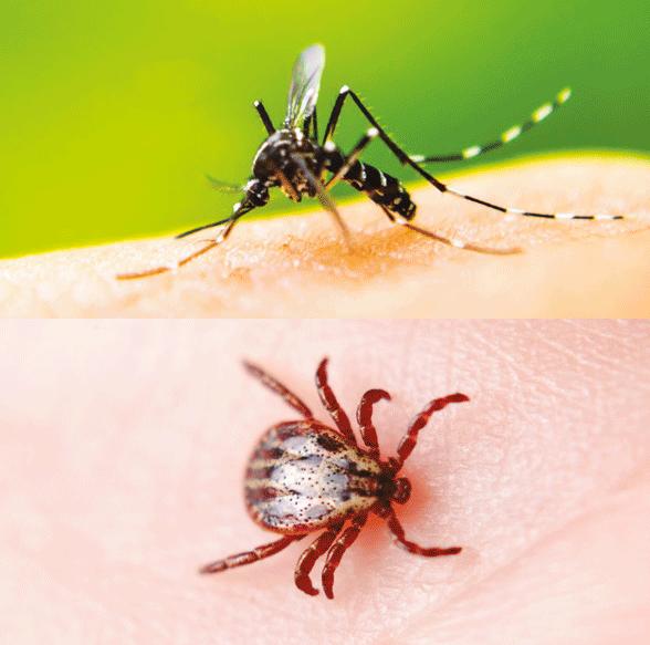 Repousser les moustiques et les tiques avec REPULSTICK, le 1er ...